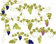 merging hops and grapes